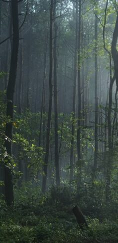 Forest-Portrait